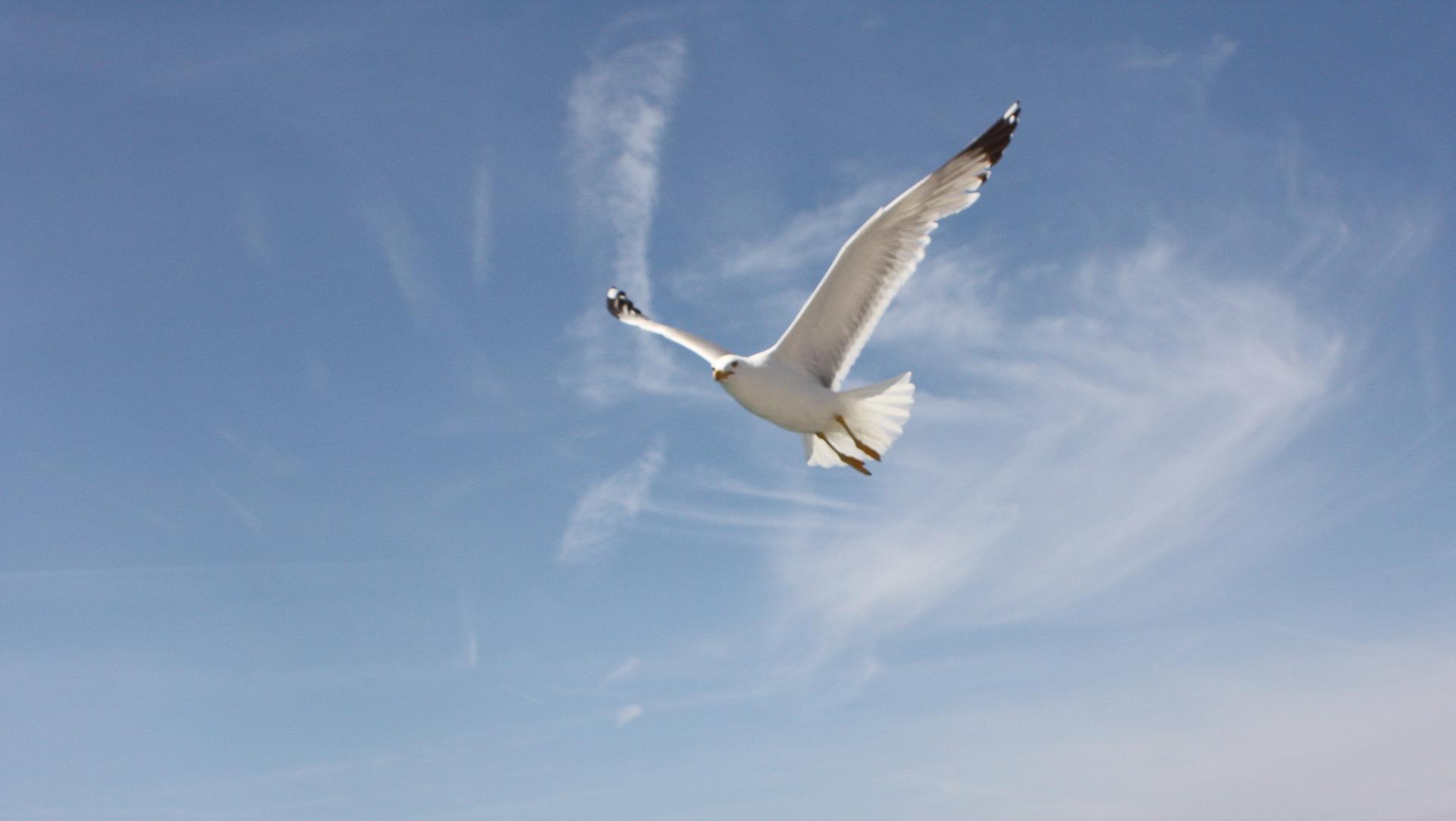 slide_bird